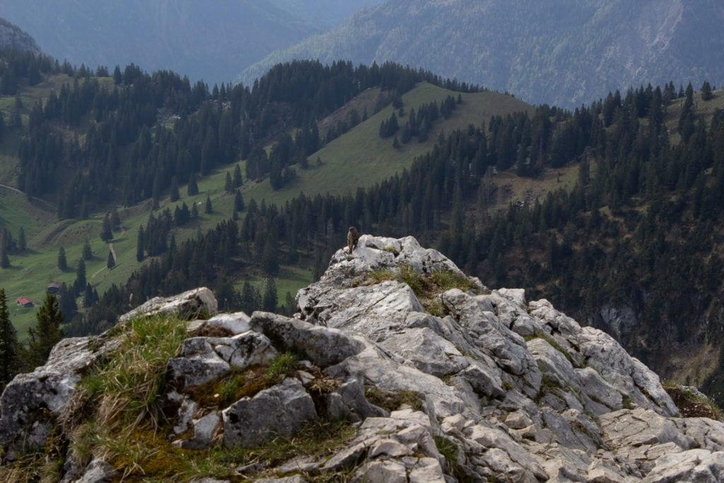 Vogel am Breitenstein